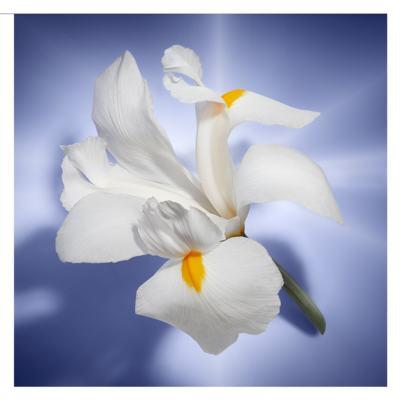Imagem 6 do produto La Vie Est Belle Lancôme - Perfume Feminino - Eau de Parfum - 75ml